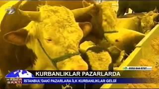 Kanal 7 - Kurbanlıklar pazarda