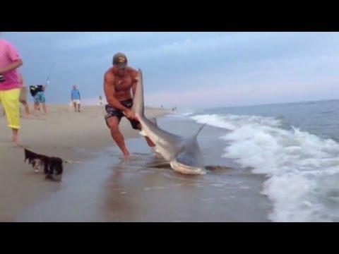 как человек ловит акулу