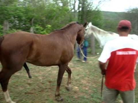 cavalo cruzando herik