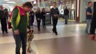 Tiger walks inside mall