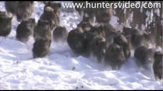 Wild Boar Fever 2 - Hunters Video
