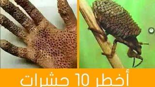 اخطر 10 حشرات  فى العالم