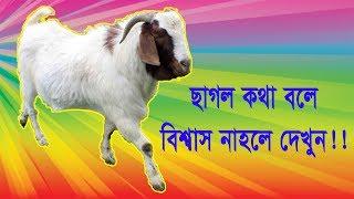 Funny Video by Kajol । ছাগল কি ভাবে কথা বলে দেখুন