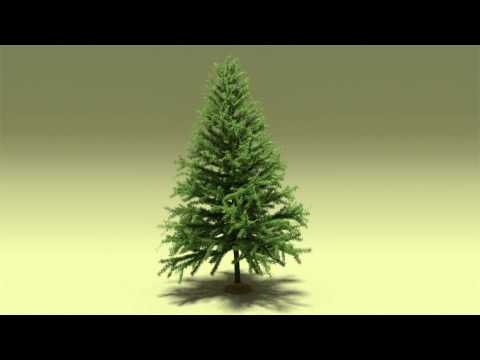 Xxx Mp4 Pine Tree Blender 3D Model Free Download 3gp Sex