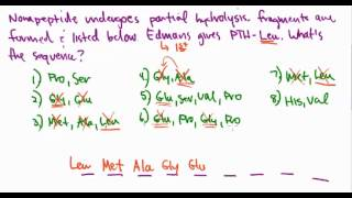 Amino Acids 29:  Primary Protein Sequence Example Problem