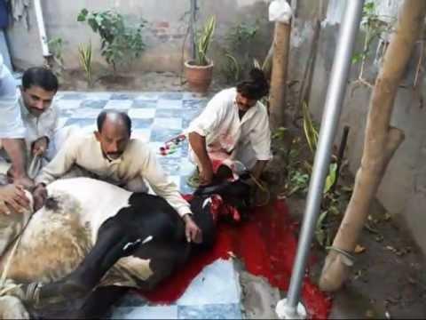 Best Eid Qurbani 2011 pakistan