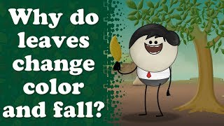 Why do leaves turn yellow? plus 4 more videos | It's AumSum Time