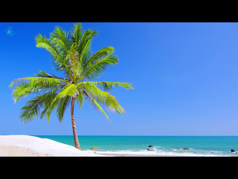 Xxx Mp4 🎧 Paradise Beach On Tropical Island ☀ Beach View Ocean Ambience For Relaxation And Sleeping 3gp Sex
