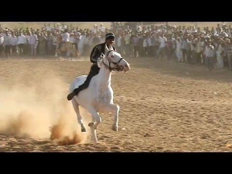 Xxx Mp4 घोड़े की दौड़ Rajasthan Raniwara Horse Ki Race 2017 3gp Sex
