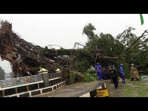 Pohon Beringin Tua di Alun-alun Banjarnegara Tumbang, 1 Tewas 6 Luka Berat