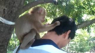 Comedy Funny Animals Video Clip | Monkey find Head louse
