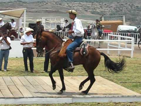 caballos bailadores michoacan uruapan