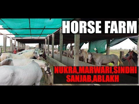 Xxx Mp4 Tour Of Horse Farm At Gujarat India 3gp Sex
