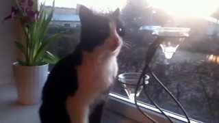 den søde kat
