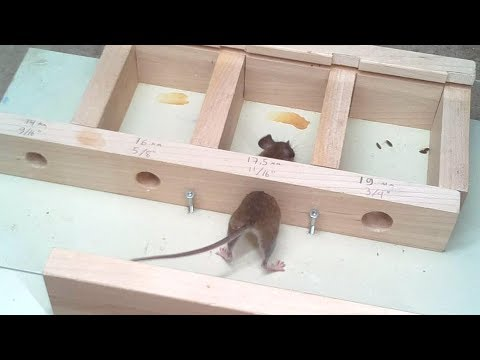 How small a hole can a mouse get through Experiments.