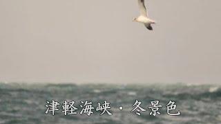 津軽海峡・冬景色  八代亜紀