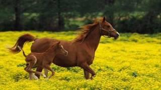 Клас - Диви коне