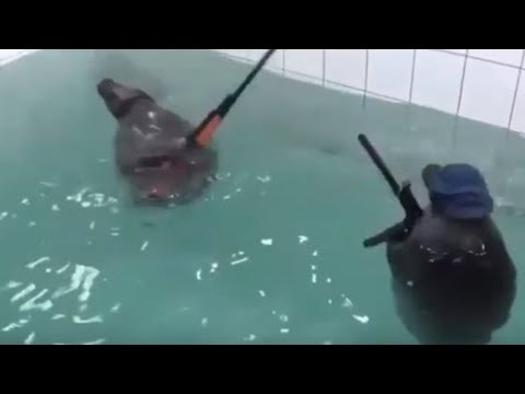 SEALS WITH GUNS Clean Try Not To Laugh Part 2