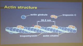 A New Paradigm of Muscle Contraction