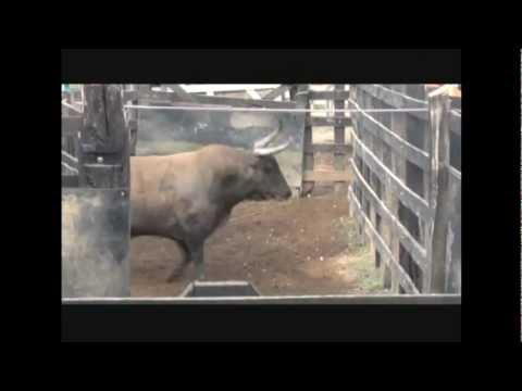 Encierro aparte y embarque de toros para sincelejo 2013 Ganaderia San Fermin