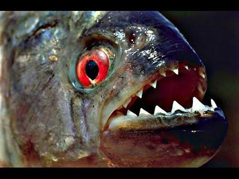 рыбак путешествие в сознание убийцы