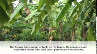 Agroecology, initiatives in Australia, India, Japan (permaculture, organic and natural farming)