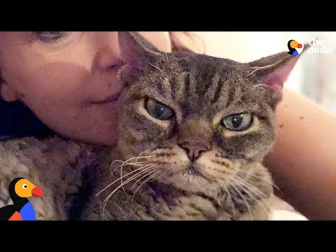 Xxx Mp4 Aggressive Cat Shocks Mom By Becoming A Snugglebug BARBARA The Dodo 3gp Sex