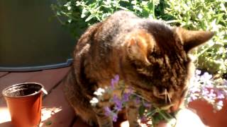 Who says cats don't like flowers & herbs