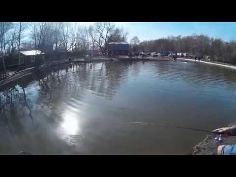 форель на пруду видео
