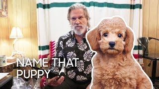 Name That Puppy with Jeff Bridges