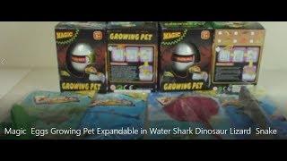 Magic  Eggs Growing Pet Expandable in Water Shark Dinosaur Lizard  Snake