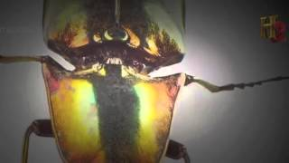 Ancient Aliens S06E10 Aliens and Insects New Documentary 2016