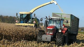 Krone Big X 630 Chopping Down Corn | Massey Ferguson 7624 | Corn Season | Danish Agriculture