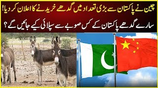 China will Buy Donkeys from Pakistan | Latest News | Pak China Relations