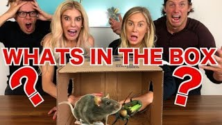"""💩GROSS💩WHAT""""S IN THE BOX CHALLENGE (LIVE ANIMALS) WITH REBECCA ZAMOLO AND MATT SLAYS