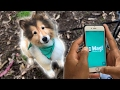 Download Video Download Can You Make Real Money On A Dog-Walking App? 3GP MP4 FLV