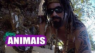 MUSTAFARY (MARCO LUQUE) -- ANIMAIS
