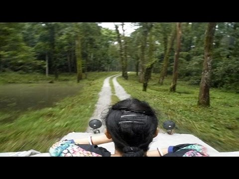 Jaldapara Jungle Car Safari | Jaldapara National Park Forest Safari by Gypsy