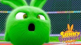 Sunny Bunnies BUNNY OLYMPICS | Cartoons For Children | Funny Cartoons For Children
