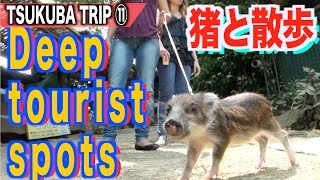 【JAPAN TRIP⑪】A tragic zoo「管理がデタラメな動物園」