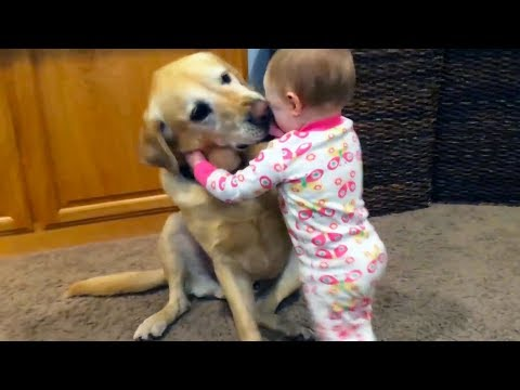 Xxx Mp4 Adorable Babies Playing With Dogs And Cats Funny Babies Compilation 2018 3gp Sex