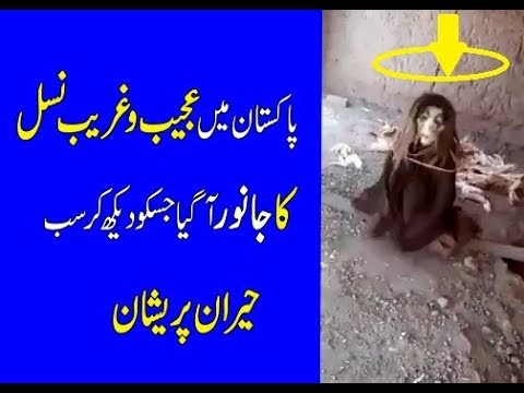 Xxx Mp4 Pakistan Mai Ajeeb Nehsil Ka Janwar A Gay Sb Pershan 3gp Sex
