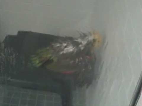 Hidden shower cam voyeur