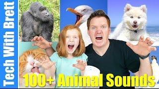 100 Google Home Animal Sounds For Kids
