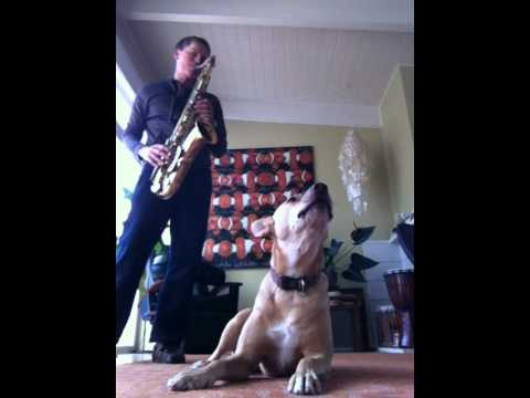 Xxx Mp4 Sax And Dog Duet 3gp Sex