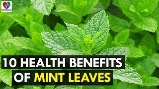 10 Health Benefits Of Mint Leaves - Health Sutra
