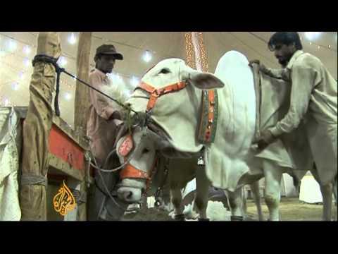Pakistan's Karachi hosts Asia's largest cattle market