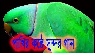টিয়া পাখীর বাংলা গান, না দেখলে চরম মিছ TALKING BIRD FUNNY PARROT bangla