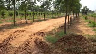 SANDAL WOOD PLANTATION IN 50 ACERS AT SHADNAGAR  WE SUPPLY SANDALWOOD PLANTS ALSO 9581606161