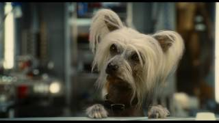 Cats & Dogs: The Revenge of Kitty Galore - Trailer
